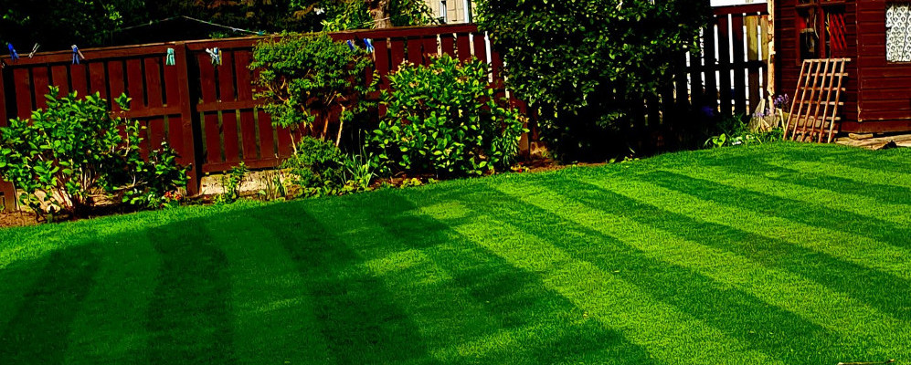 How to care for your lawn | Blog by TTS Garden Services